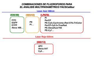 COMBINACIONES DE FLUOROFOROS PARA  EL ANALISIS MULTIPARAMÉTRICO FACSCalibur