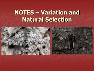 NOTES – Variation and Natural Selection