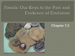 Fossils: Our Keys to the Past and Evidence of Evolution