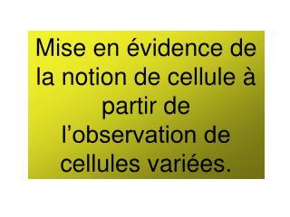 Mise en évidence de la notion de cellule à partir de l'observation de cellules variées.