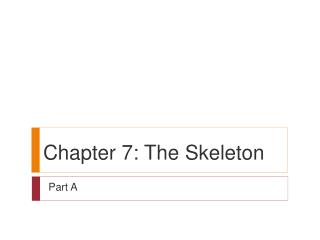 Chapter 7: The Skeleton