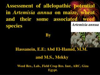 Hassanein, E.E; Abd El-Hamid, M.M.  and M.S., Mekky