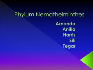 Phylum Nemathelminthes