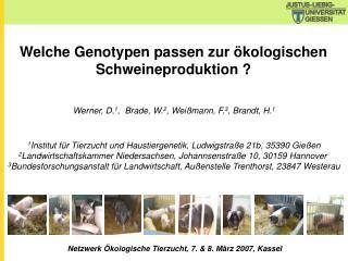 Welche Genotypen passen zur ökologischen Schweineproduktion ?