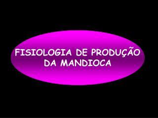 FISIOLOGIA DE PRODUÇÃO DA MANDIOCA