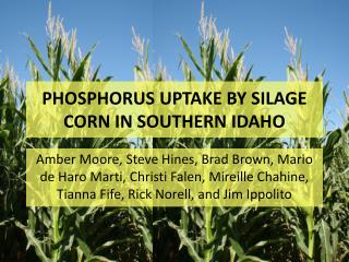 Phosphorus uptake by silage corn in southern Idaho