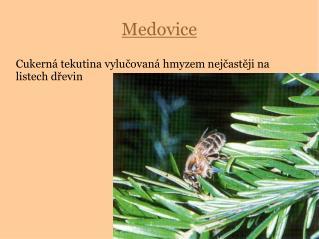 Medovice