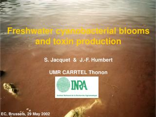Freshwater cyanobacterial blooms and toxin production S. Jacquet  &  J.-F. Humbert