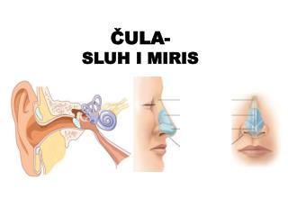 ?ULA- SLUH I MIRIS