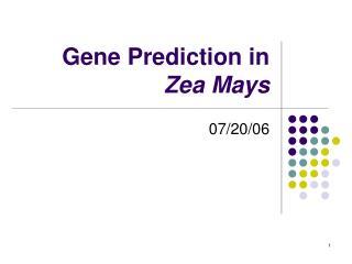 Gene Prediction in  Zea Mays