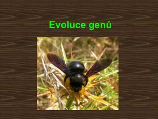 Evoluce genů