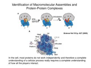 Identification of Macromolecular Assemblies and Protein-Protein Complexes