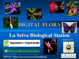 DIGITAL FLORA