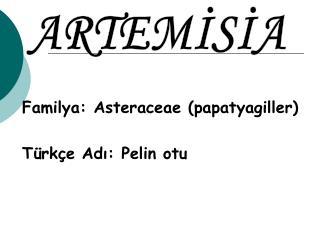 Familya: Asteraceae (papatyagiller) Türkçe Adı: Pelin otu