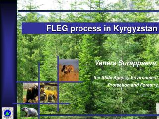Venera Surappaeva,  the State Agency Environment Protection and Forestry