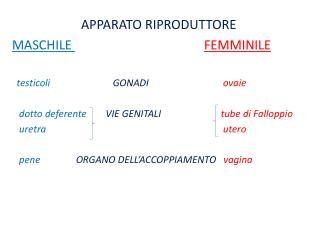 APPARATO RIPRODUTTORE MASCHILE  FEMMINILE testicoli   GONADI         ovaie