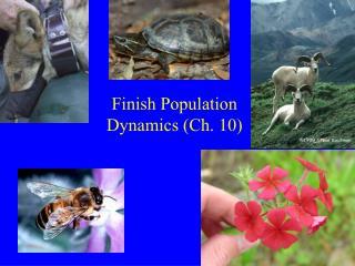 Finish Population Dynamics (Ch. 10)