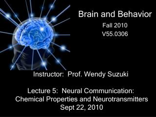 Brain and Behavior  Fall 2010 V55.0306