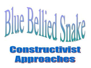 Blue Bellied Snake