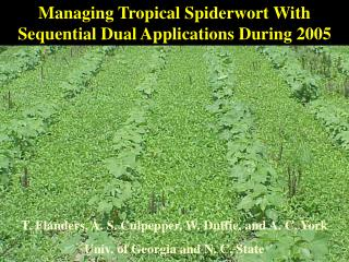 Managing Tropical Spiderwort With Sequential Dual Applications During 2005