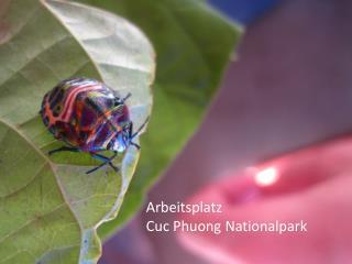 Arbeitsplatz Cuc Phuong Nationalpark