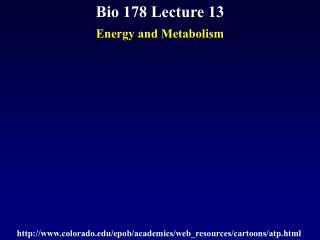 Bio 178 Lecture 13