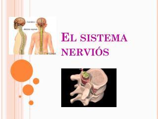 El sistema nervi�s