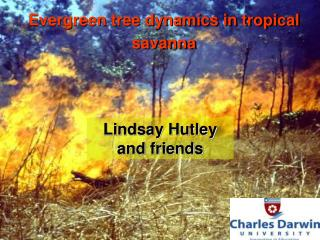 Evergreen tree dynamics in tropical savanna