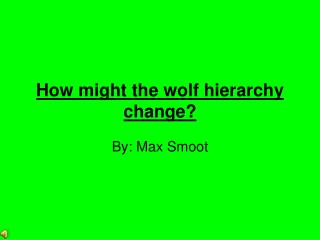 How might the wolf hierarchy  change?