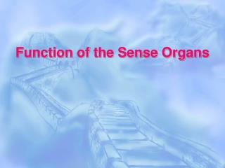 Function of the Sense Organs