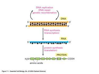 07_01_Genetic info.jpg