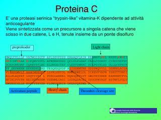 Proteina C