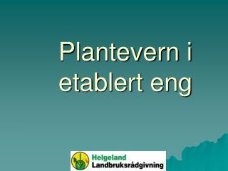 Plantevern i etablert eng