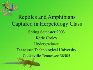 Reptiles and Amphibians Captured in Herpetology Class