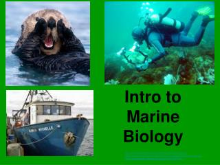 Intro to Marine Biology