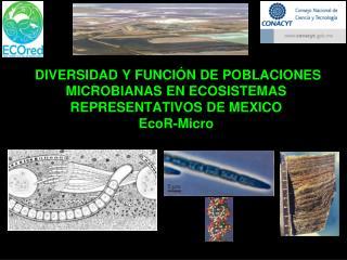 EcoR-Micro