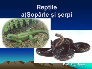 Reptile a)Şopârle şi şerpi