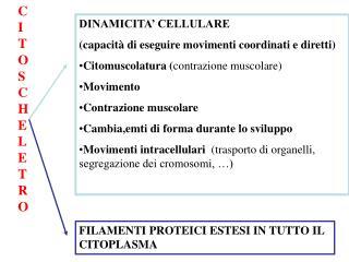 DINAMICITA' CELLULARE (capacità di eseguire movimenti coordinati e diretti)