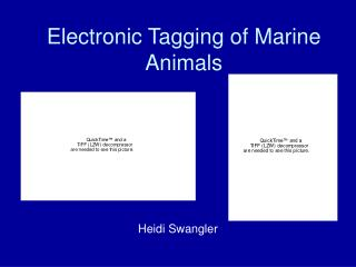 Electronic Tagging of Marine Animals