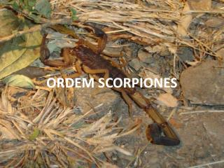 ORDEM SCORPIONES