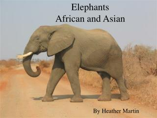 Elephants African and Asian