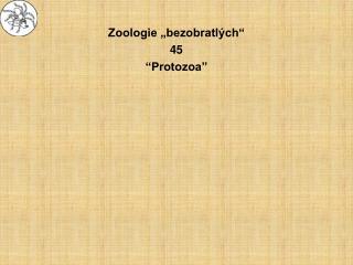 """Zoologie """"bezobratlých"""" 45 """"Protozoa"""""""