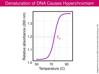Denaturation of DNA Causes Hyperchromism