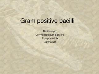 Gram positive bacilli