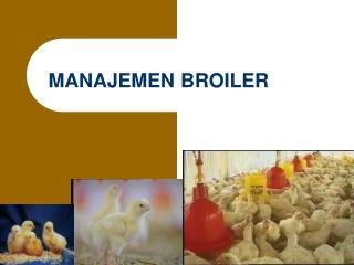 MANAJEMEN BROILER
