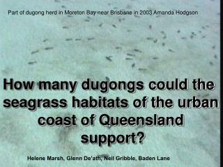 How many dugongs could the  seagrass habitats of the urban coast of Queensland  support