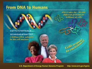 U.S. Department of Energy Human Genome Program ornl/hgmis