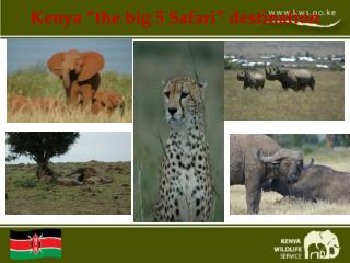 "Kenya ""the big 5 Safari"" destination"