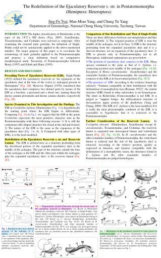 The Redefinition of the Ejaculatory Reservoir s. str. in Pentatomomorpha (Hemiptera: Heteroptera)
