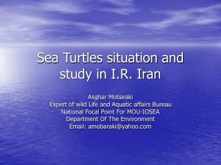 Sea Turtles situation and study in I.R. Iran